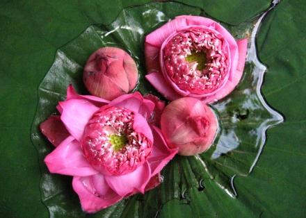 Anaïs-voyage-dans-son-assiette_011_Thailande_05-lotus