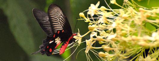 kualalumpur-butterflypark-2