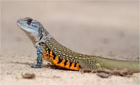 Melaka-reptile-park