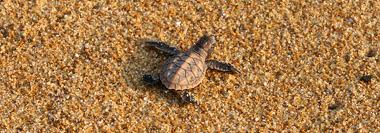 Tioman-sea-turtle-sanctuary