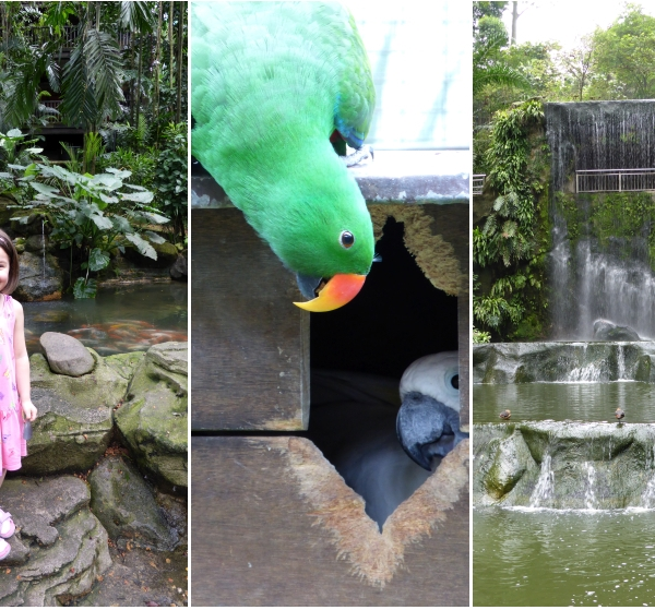 LDdA-Voyage-Malaisie-Birds-Parc