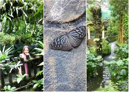 LDdA-Voyage-Malaisie-Butterflies-parc