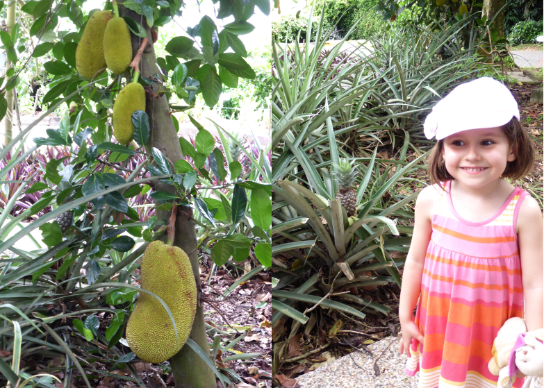 Plantation de durian et d'ananas