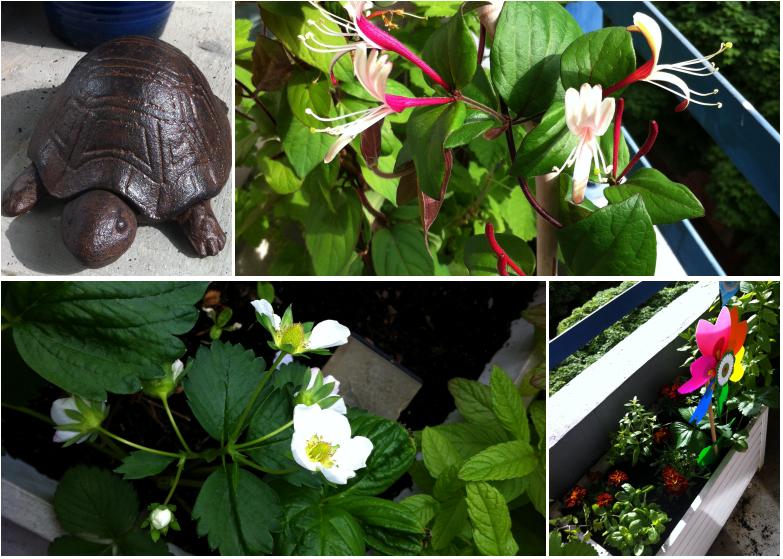 Notre-petit-coin-de-verdure_05-printemps