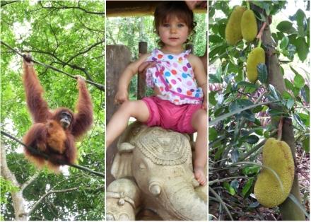 LDdA-Voyage-Malaisie-Singapour-Zoo-3