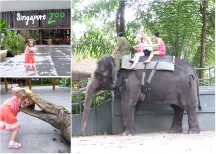 LDdA-Voyage-Malaisie-Singapour-Zoo