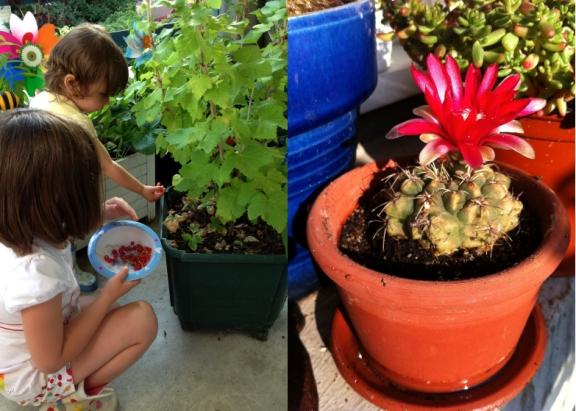 LDdA-notre-petit-coin-de-verdure_06-cactus