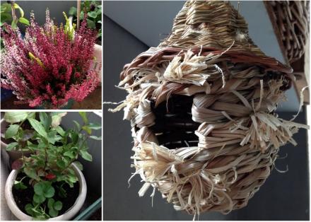 LDdA-notre-petit-coin-de-verdure_07_bruyere-myrtille-nichoir
