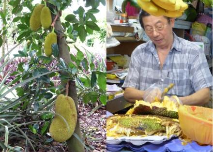LDdA_Singapour_Durian