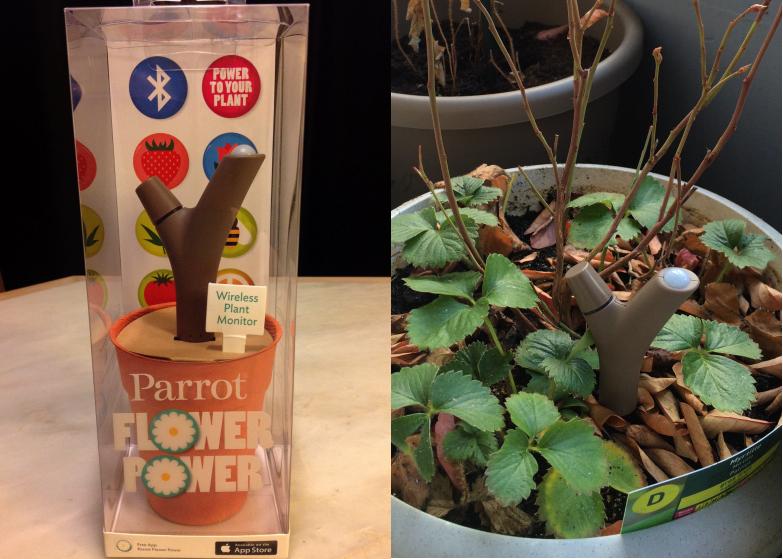 LDdA-notre-petit-coin-de-verdure_08-Power-Flower-Parrot-01