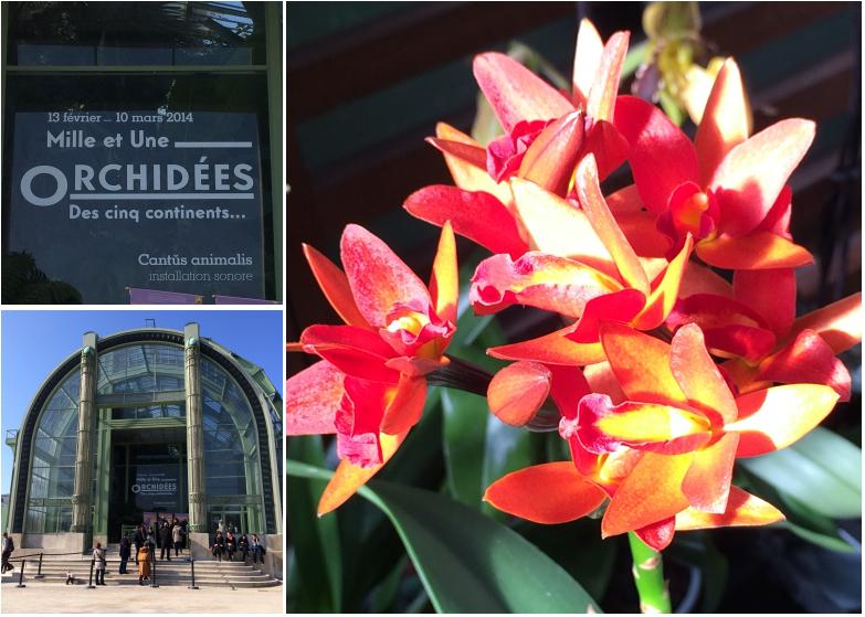 Une expo & un resto : mille et une orchidées et le ...