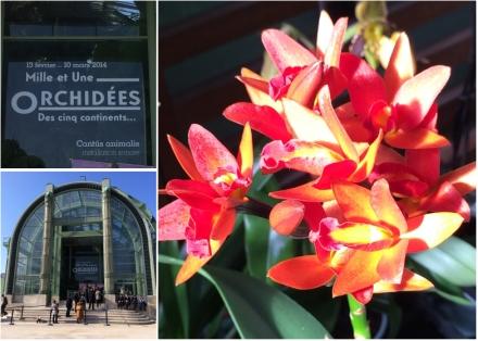 Expo-paris-mille-et-une-orchidee-jardin-des-plantes-00