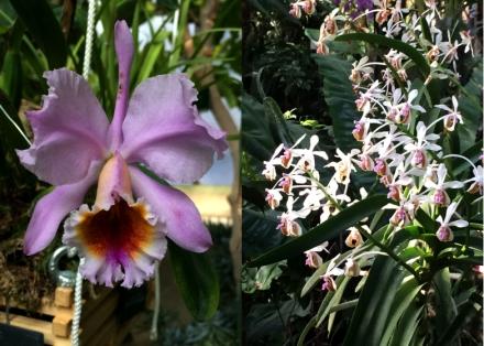 Expo-paris-mille-et-une-orchidee-jardin-des-plantes-01