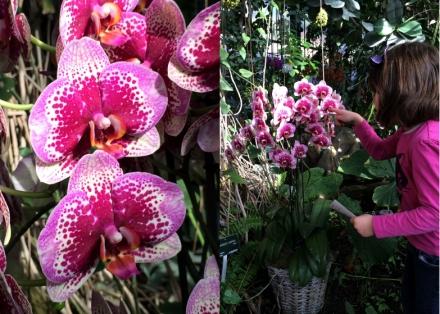 Expo-paris-mille-et-une-orchidee-jardin-des-plantes-02