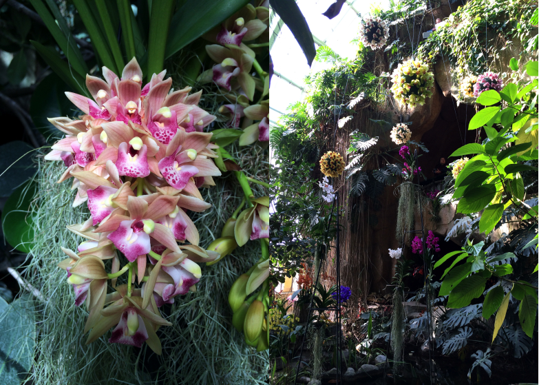 Best orchidee jardin des plantes paris contemporary for Exposition plantes paris