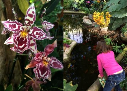 Expo-paris-mille-et-une-orchidee-jardin-des-plantes-04