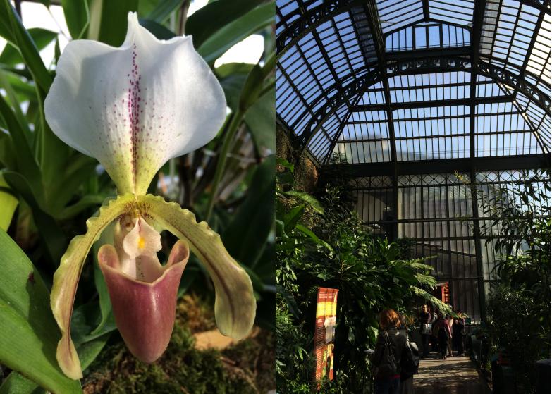Une expo & un resto : mille et une orchidées et le restaurant de la ...