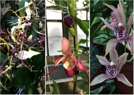 Expo-paris-mille-et-une-orchidee-jardin-des-plantes-06