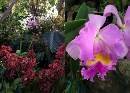 Expo-paris-mille-et-une-orchidee-jardin-des-plantes-07