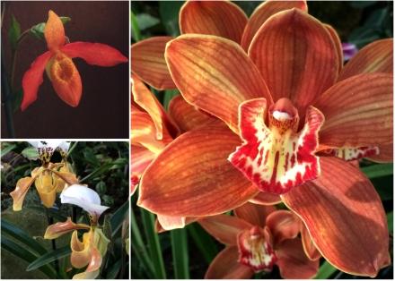 Expo-paris-mille-et-une-orchidee-jardin-des-plantes-09