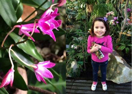 Expo-paris-mille-et-une-orchidee-jardin-des-plantes-chouchou