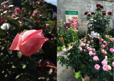 LDdA_Jardins-Jardin-Tuileries-05-Delbard