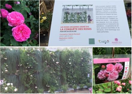 LDdA_Jardins-Jardin-Tuileries-07-la-conquete-des-roses