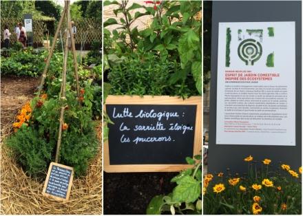LDdA_Jardins-Jardin-Tuileries-08-esprit-jardin-comestible
