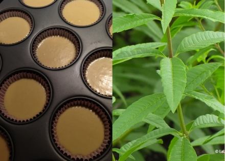 LDdA_Recette-muffin-mures-3