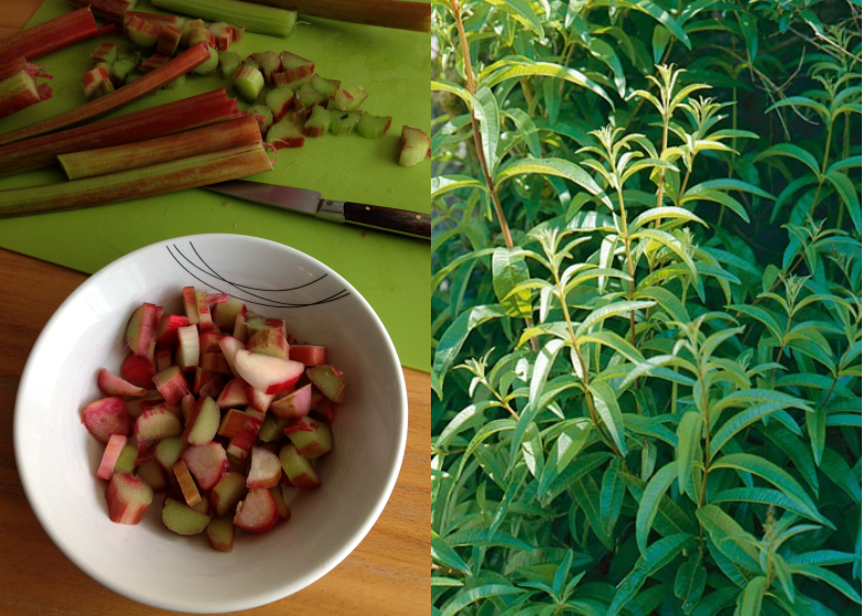 LDdA_Recette_compotee-Rhubarbe-verveine-citronnelle_00