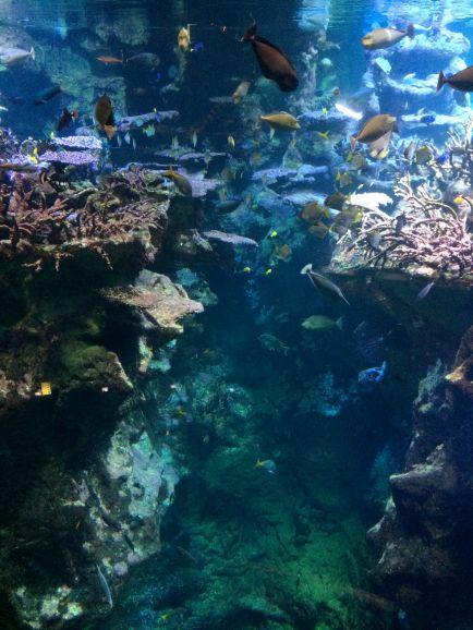 Escapade-gourmande-Cherbourg-Cite-de-la-mer-expo_Explorez-les-fonds-marins-06