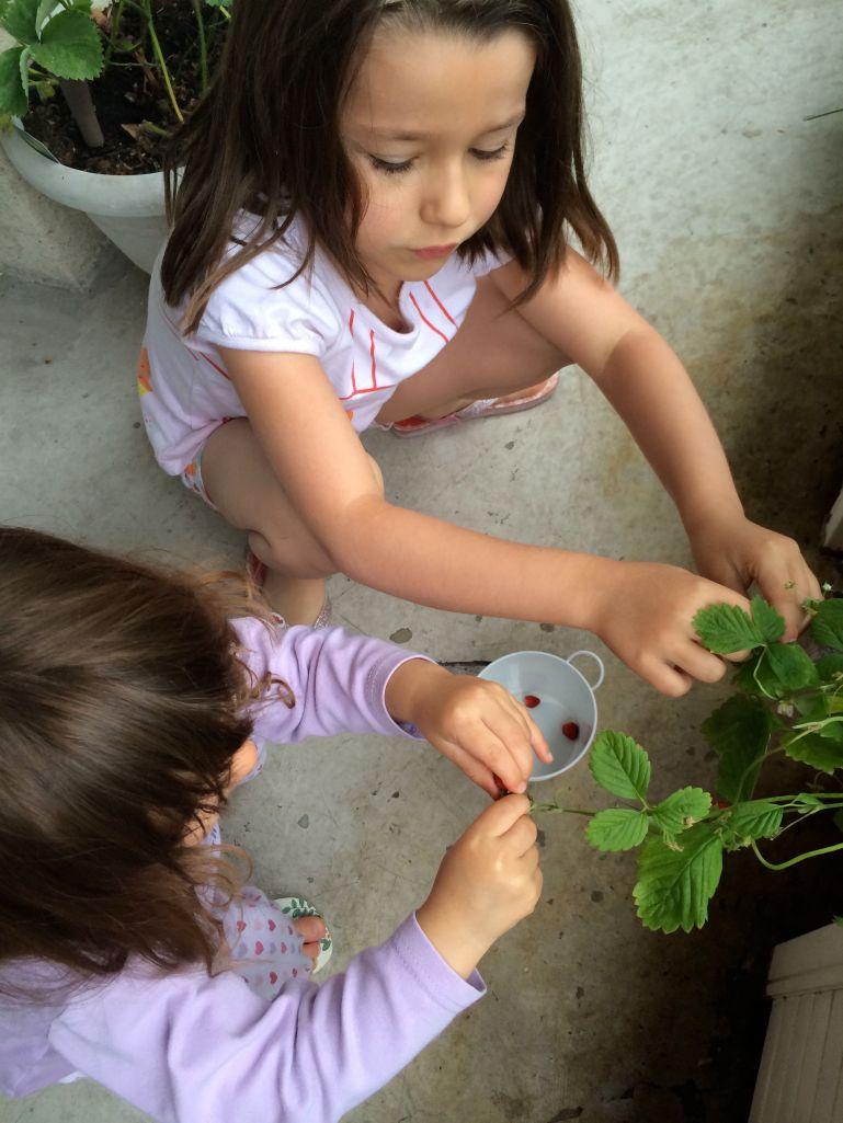 LDdA-notre-petit-coin-de-verdure_09_cueillette