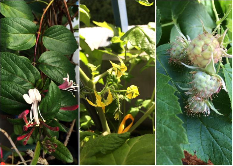 LDdA-notre-petit-coin-de-verdure_09_Premieres-fleurs-fruits