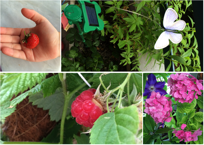 LDdA-notre-petit-coin-de-verdure_09_Premiers-fruits