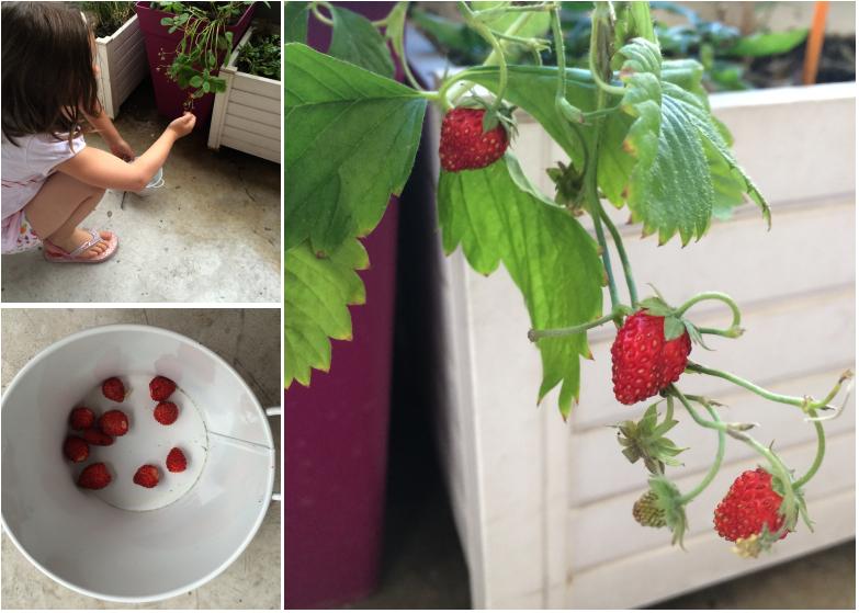 LDdA-notre-petit-coin-de-verdure_10_fraises-des-bois