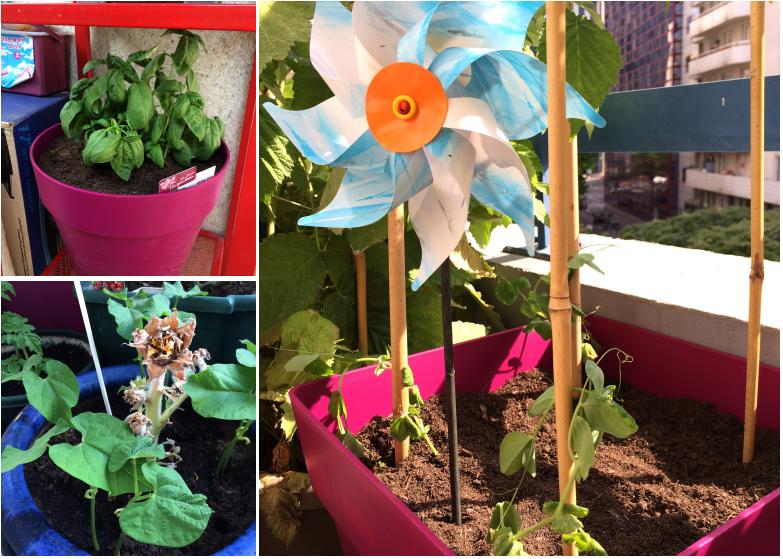 LDdA-notre-petit-coin-de-verdure_10_plantattion
