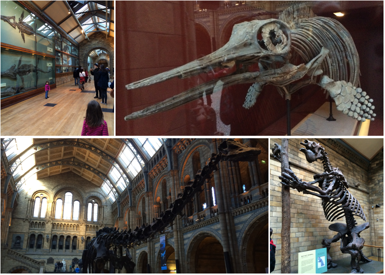 Anais_blogtrotteur-London_NHM_dinosaures