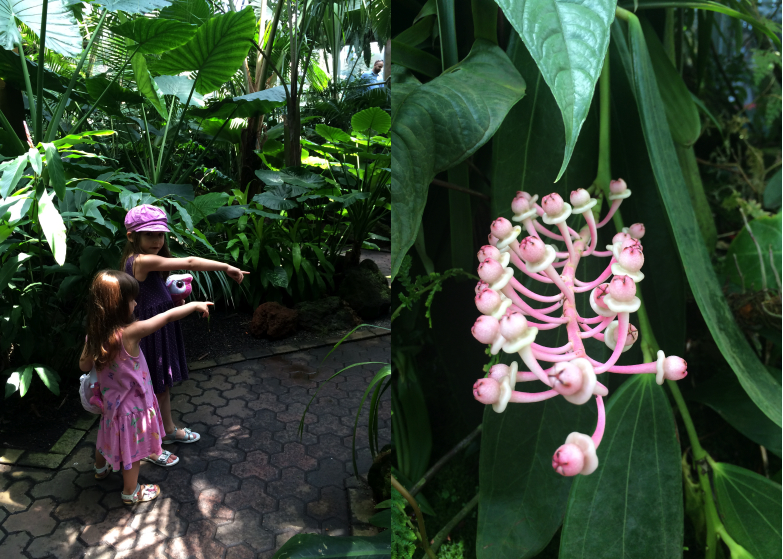 LDdA_Anais-voyage-dans-son-assiette-Madere-jardin-botanique-04