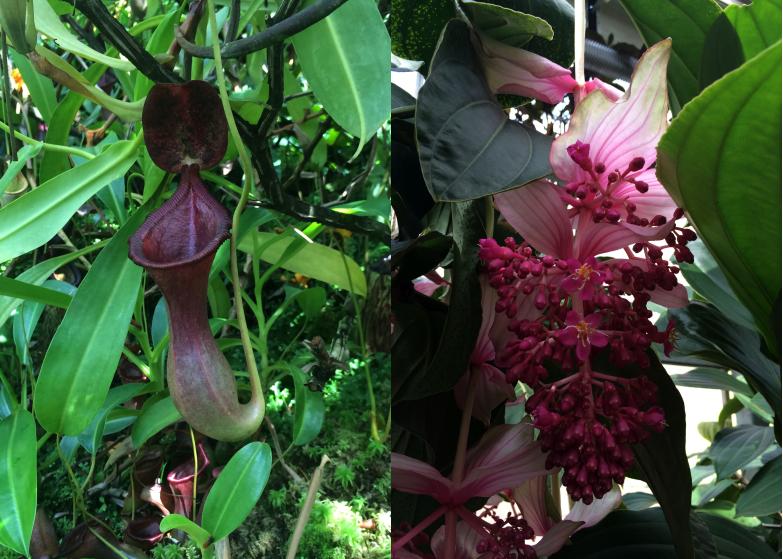 LDdA_Anais-voyage-dans-son-assiette-Madere-jardin-botanique-05
