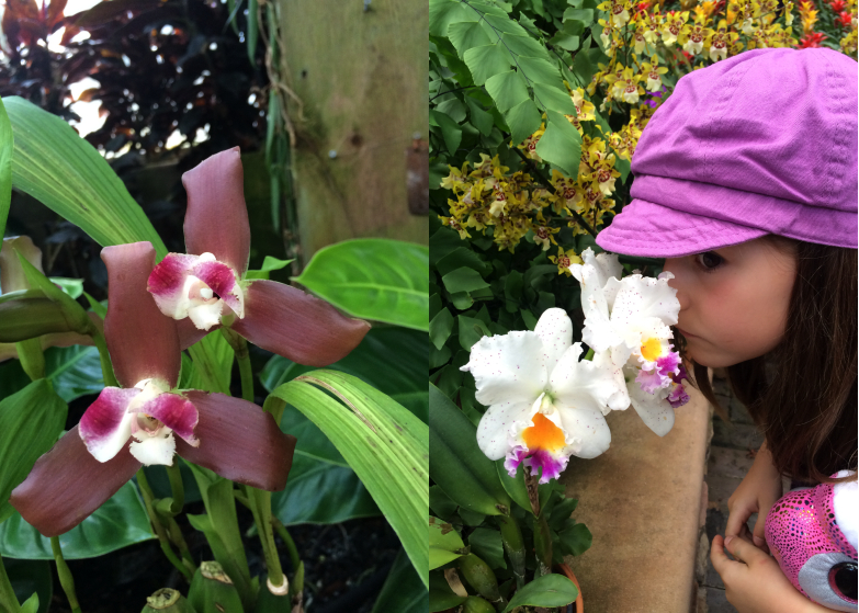 LDdA_Anais-voyage-dans-son-assiette-Madere-jardin-botanique-06