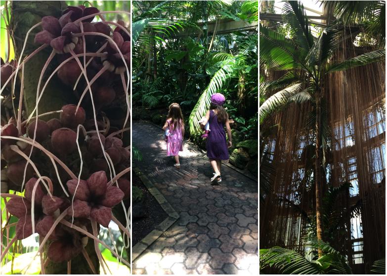 LDdA_Anais-voyage-dans-son-assiette-Madere-jardin-botanique-09