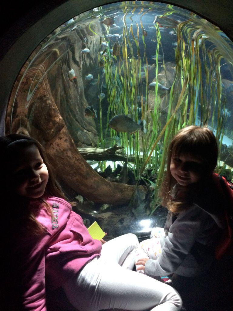 LDdA_Anais-voyage-dans-son-assiette_USA_Atlanta_Aquarium_02