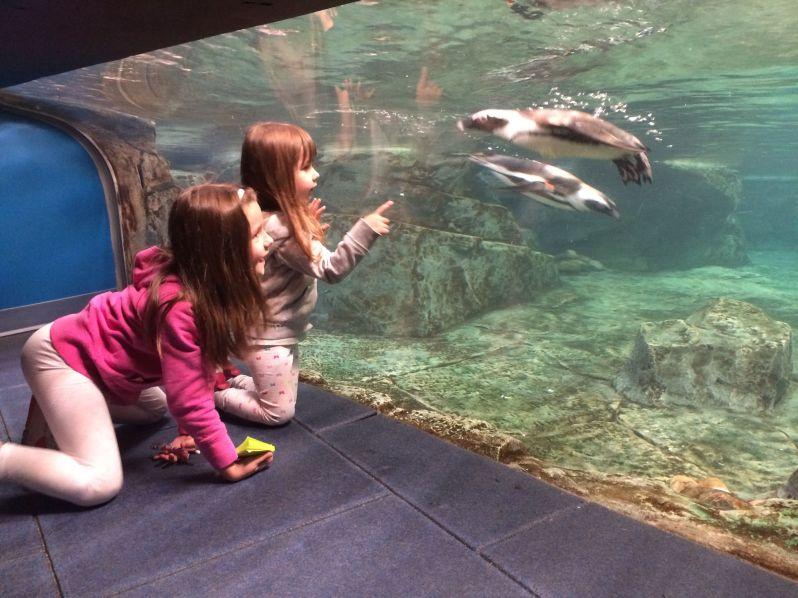 LDdA_Anais-voyage-dans-son-assiette_USA_Atlanta_Aquarium_04