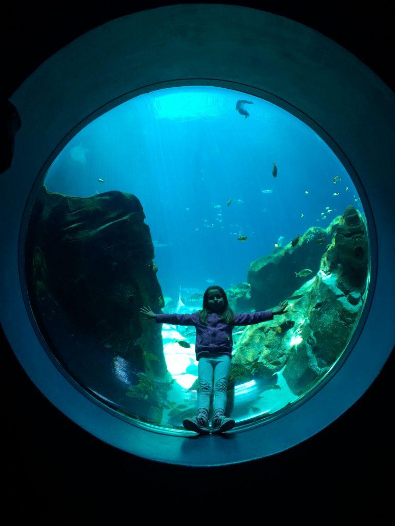 LDdA_Anais-voyage-dans-son-assiette_USA_Atlanta_Aquarium_05