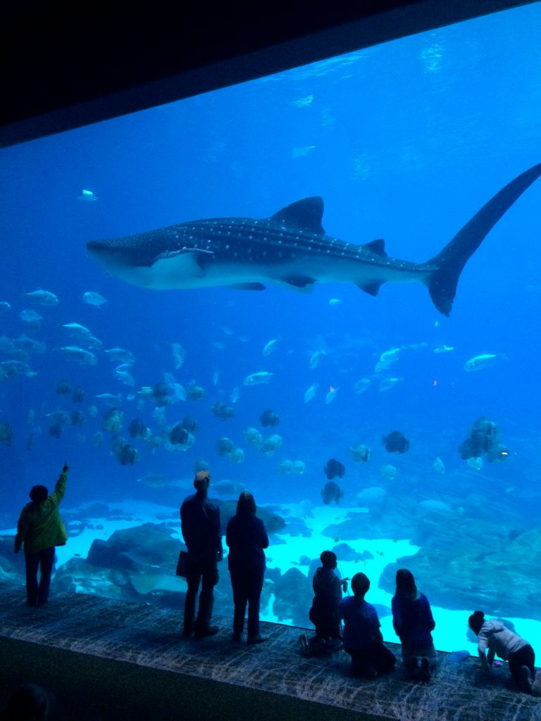 LDdA_Anais-voyage-dans-son-assiette_USA_Atlanta_Aquarium_06