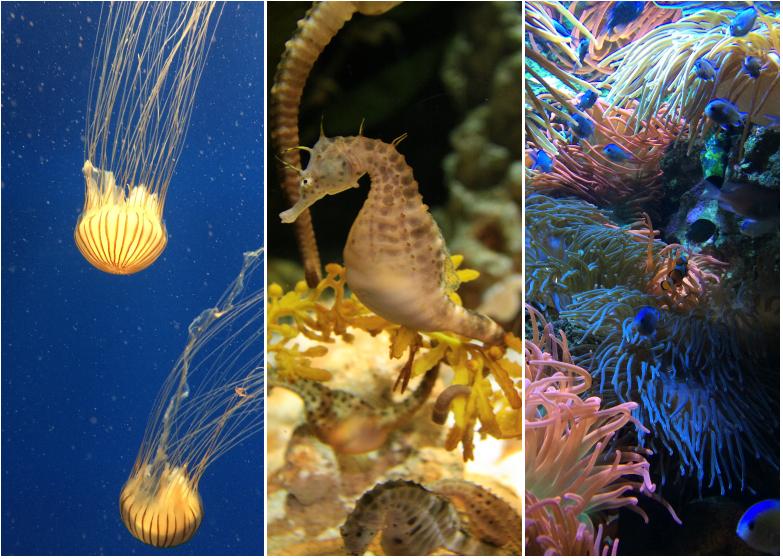 LDdA_Anais-voyage-dans-son-assiette_USA_Atlanta_Aquarium_07
