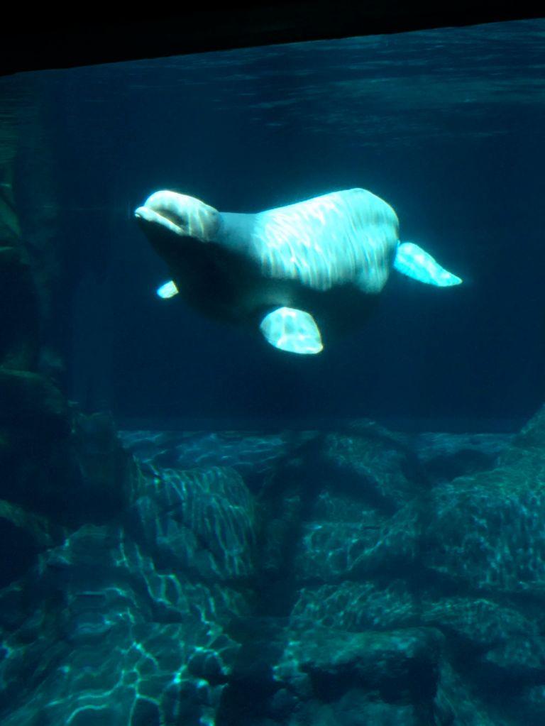 LDdA_Anais-voyage-dans-son-assiette_USA_Atlanta_Aquarium_09