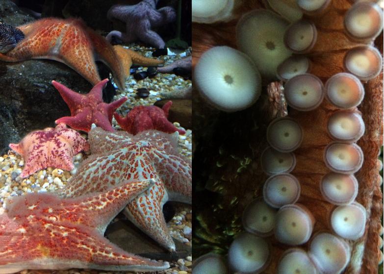 LDdA_Anais-voyage-dans-son-assiette_USA_Atlanta_Aquarium_10