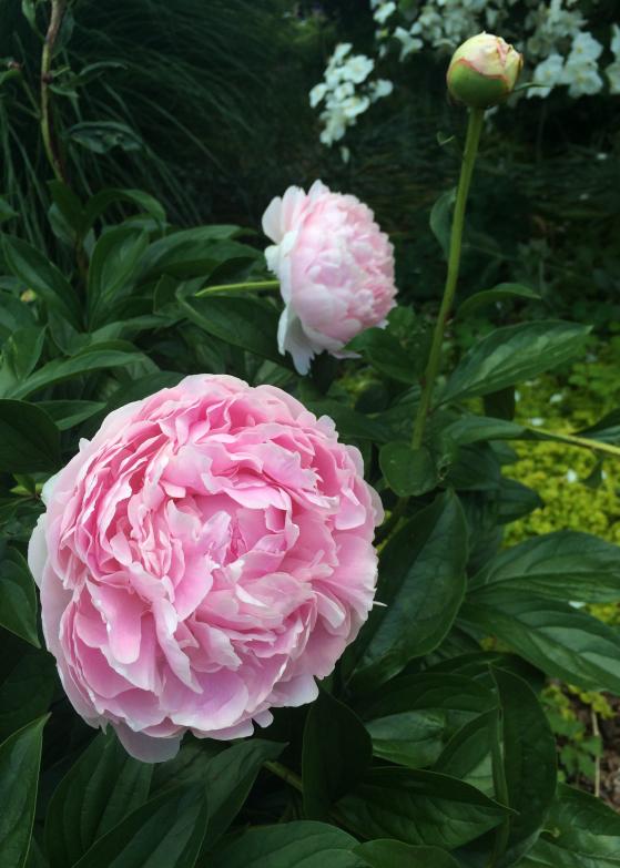 LDdA_Anais-voyage-dans-son-assiette_USA_Atlanta_Jardin_Botanic_02