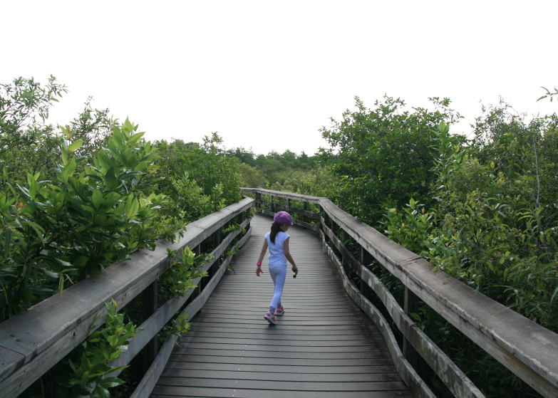 LDdA_Anais-voyage-dans-son-assiette-USA_Everglades_Anhinga_Trail_01